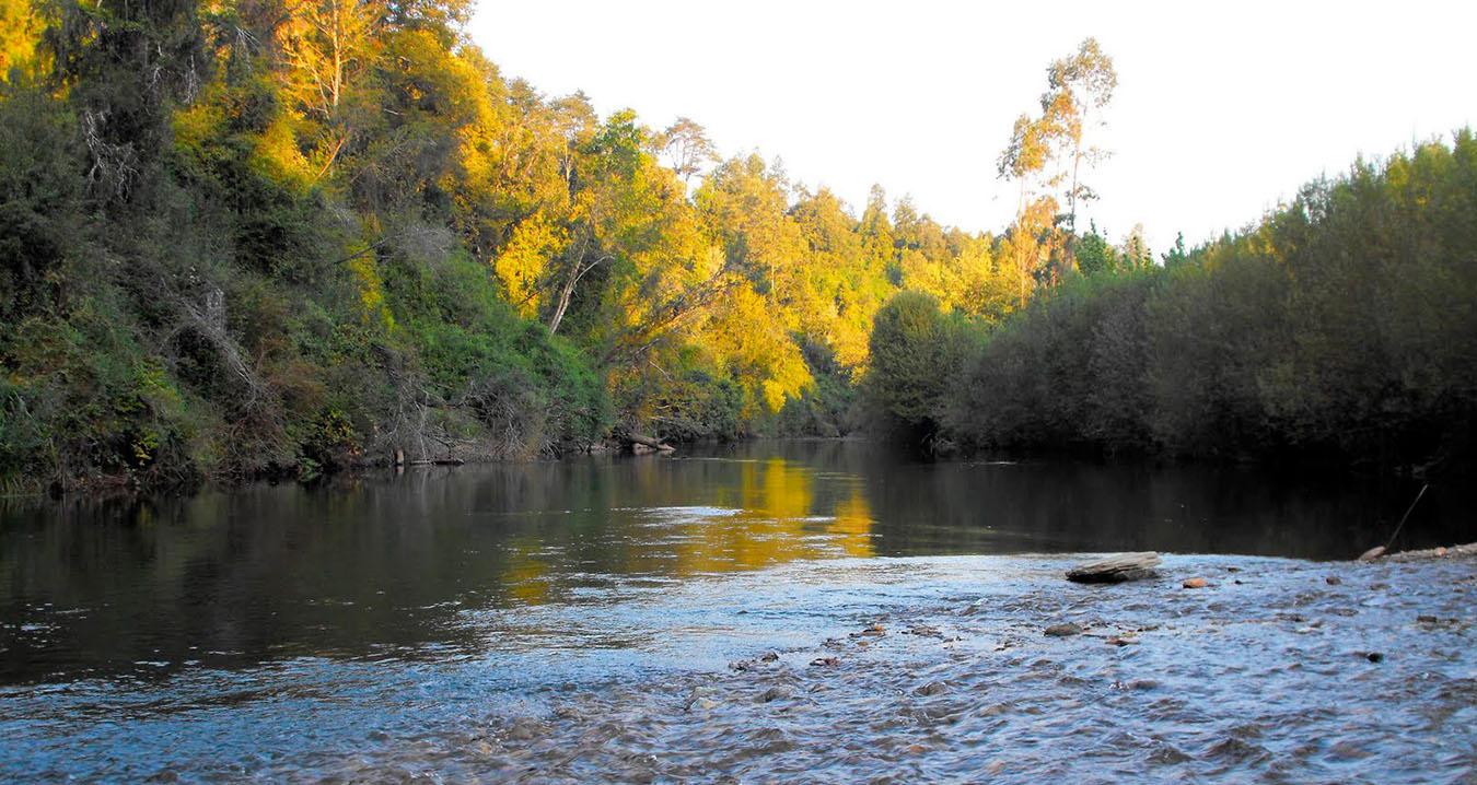 Río Collilelfu, Reumén